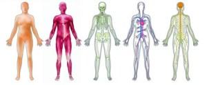 five bodies
