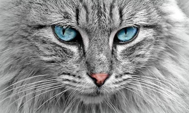 meilleur livre chat