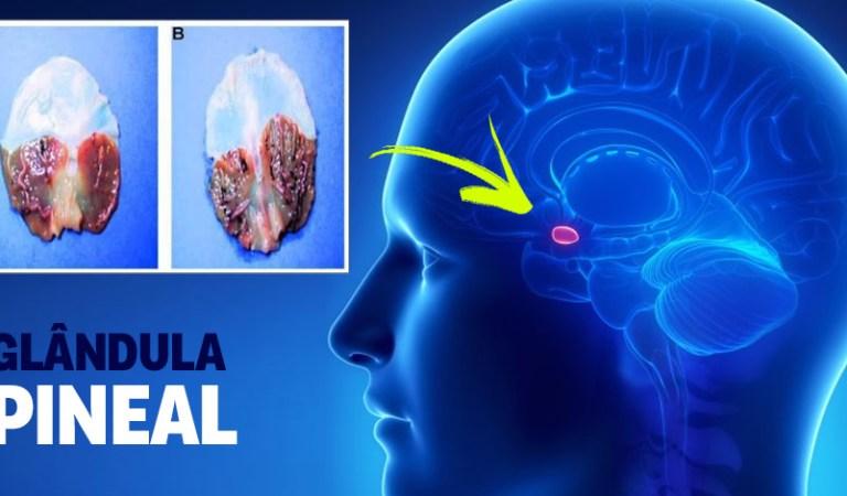 Como ativar e descalcificar a sua Glândula Pineal