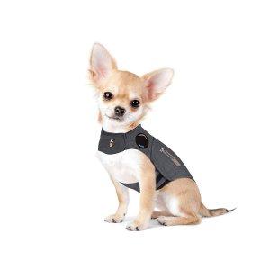 Chihuahua_Thundershirt_Silvester