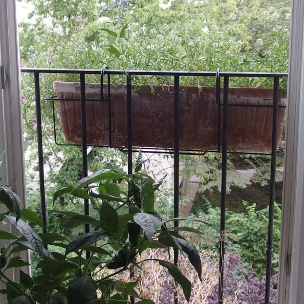 Die Balkon-Challenge im August-September