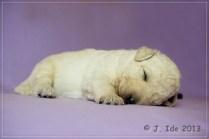 schlaf Baby schlaf
