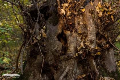 Gruselbäume