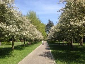Frühjahr auf demm Hauptfriedhof