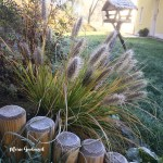 Spätherbst im Garten