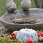 Vogelfütterung – selbstgemachte Futterplätzchen im Test