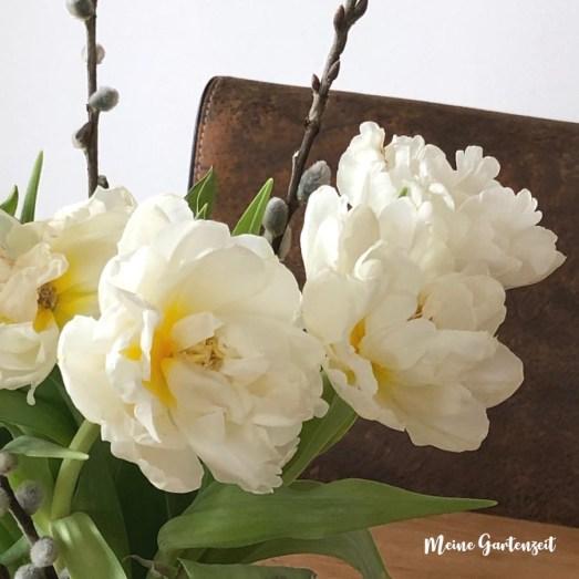 Weiße Tulpen mit Kätzchen