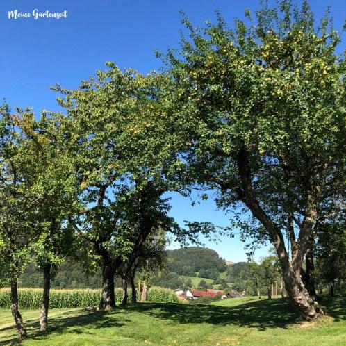 Obstgarten im August