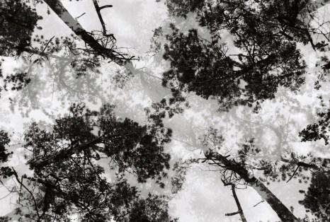 baumkronen-double-exposure