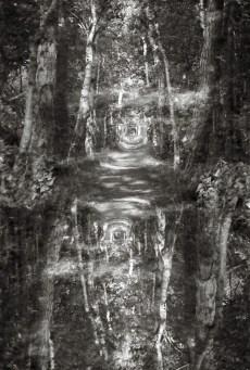 waldweg-double-exposure