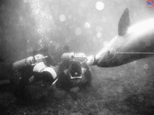 боевой дельфин старые фото