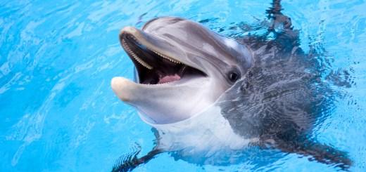 дельфин вытаскивает телефон со дна