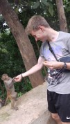 Hier hat mich gerade ein Affe gefüttert. Hier sind einfach alle so gastfreundlich!
