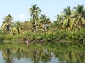 In den Backwatern von Kerala