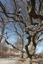Jonas im Baum