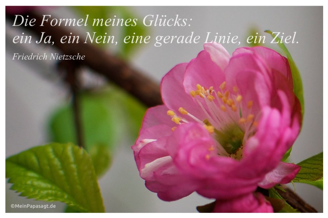 Mandelblute Mit Dem Friedrich Nietzsche Zitat Formel Meines Glucks Ein Ja Ein