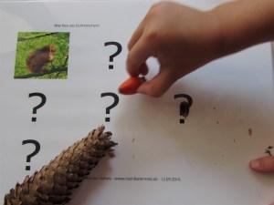 Waldfrucht-Spielkarte - Bildrecht: meinRabennest.de