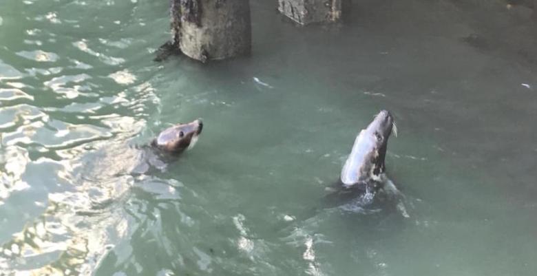 Blick ins Hafenbecken mit zwei Robben