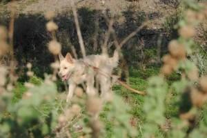 Naturgenuss mit Hund Foto:MConsoir