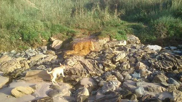 Hund und Stein Foto: MConsoir