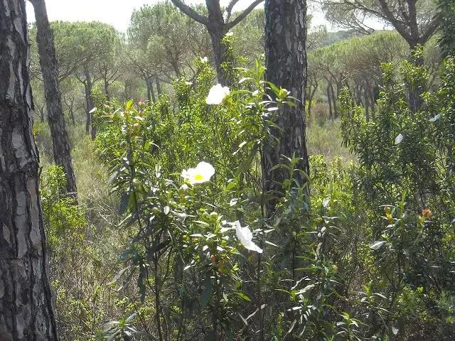 Wald beruhigt Foto: MConsoir