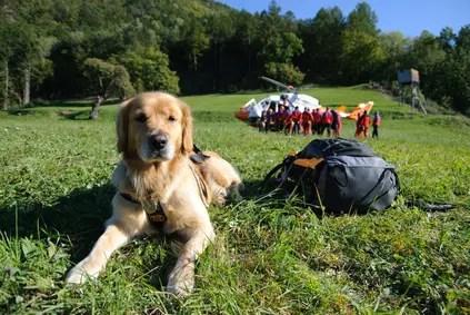 Interview mit Herrn Quadflieg vom ASB zum Thema Rettungshunde