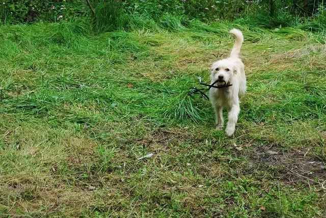 Verantwortung als Hundehalter – Teil 2: Hundehaltung und Grenzen