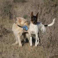 Hunde verstehen lernen: Beschwichtigungssignale beim Hund