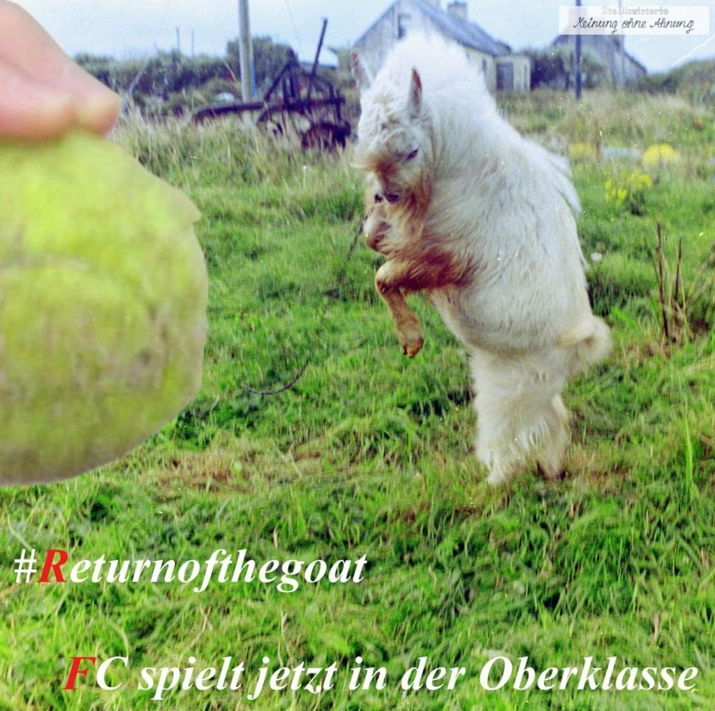 Return of the goat FC Köln 2017 Meinung ohne Ahnung