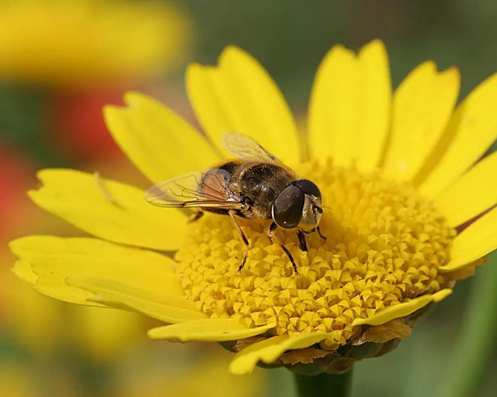 Resultado de imagem para flor e abelha