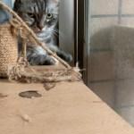 桃園市議員謝美英貓咪救援送養18