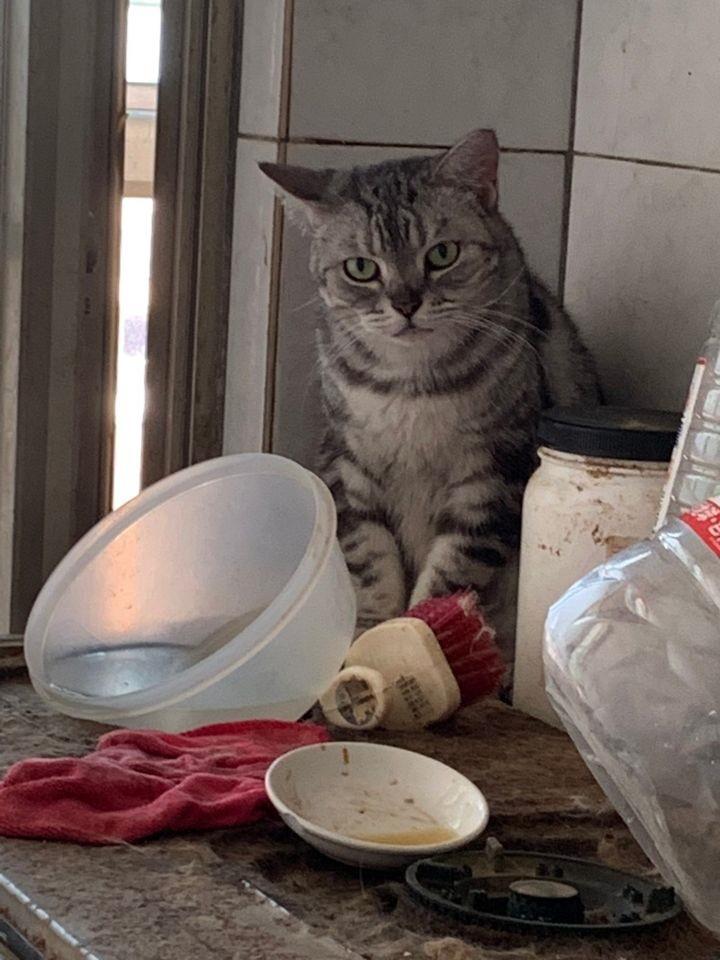桃園市議員謝美英貓咪救援送養22