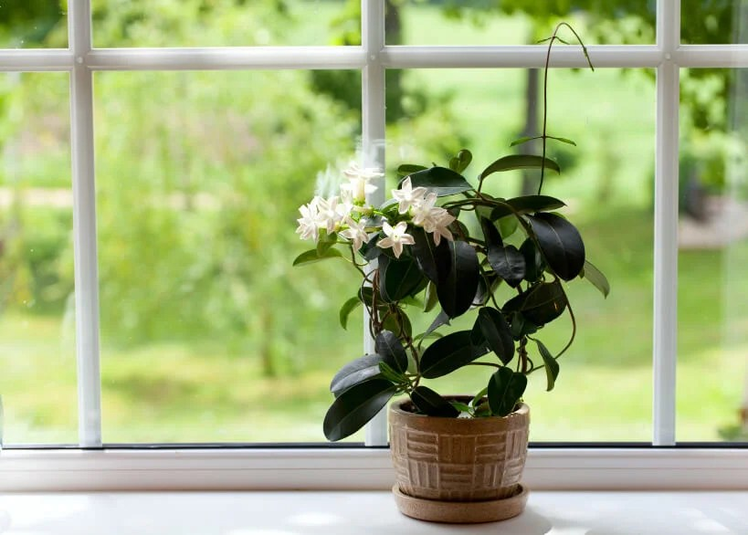 Plantas para conciliar el sueño.