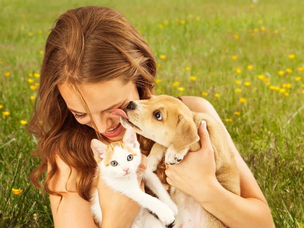 Los gatos y los perros son las opciones más recomendadas
