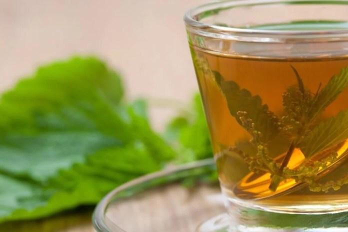 Bebida de ortiga. Plantas medicinales para los huesos