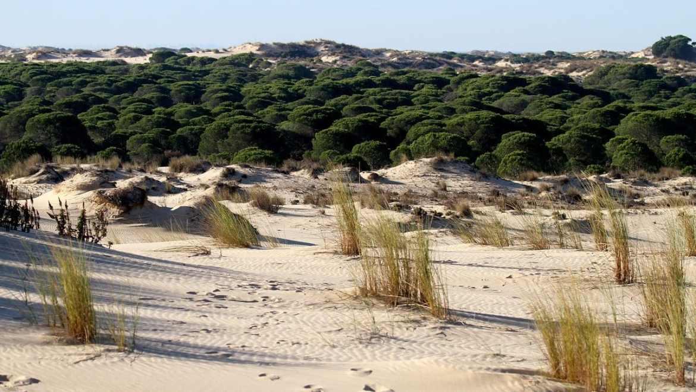 Dónde dormir en Huelva para visitar Doñana - Matalascañas