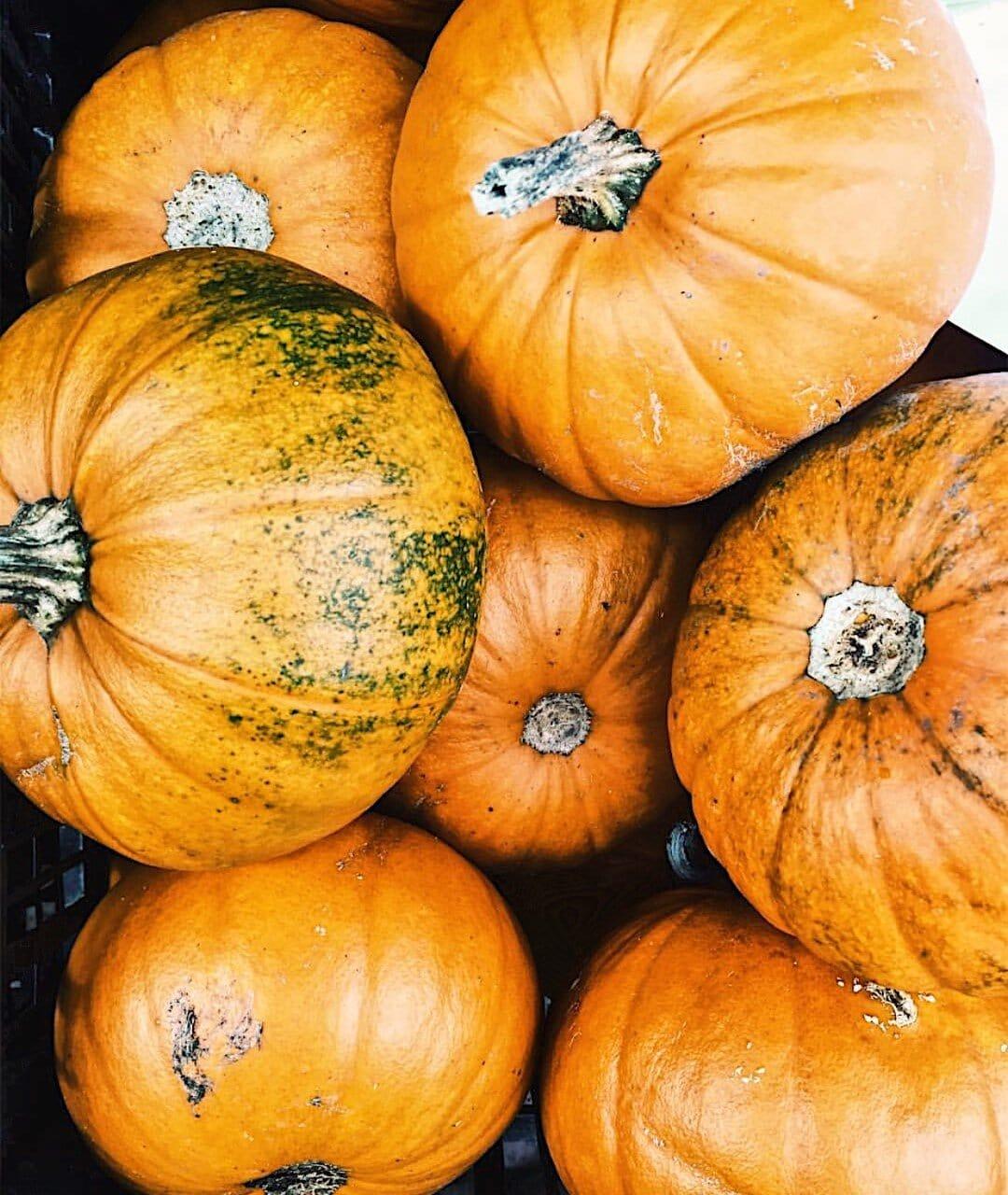 The unmistakable orange tones of the Pumpkin!