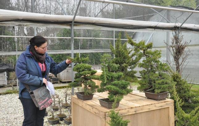 Me inspecting some juniperus