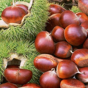 Chestnut-fruit-extract