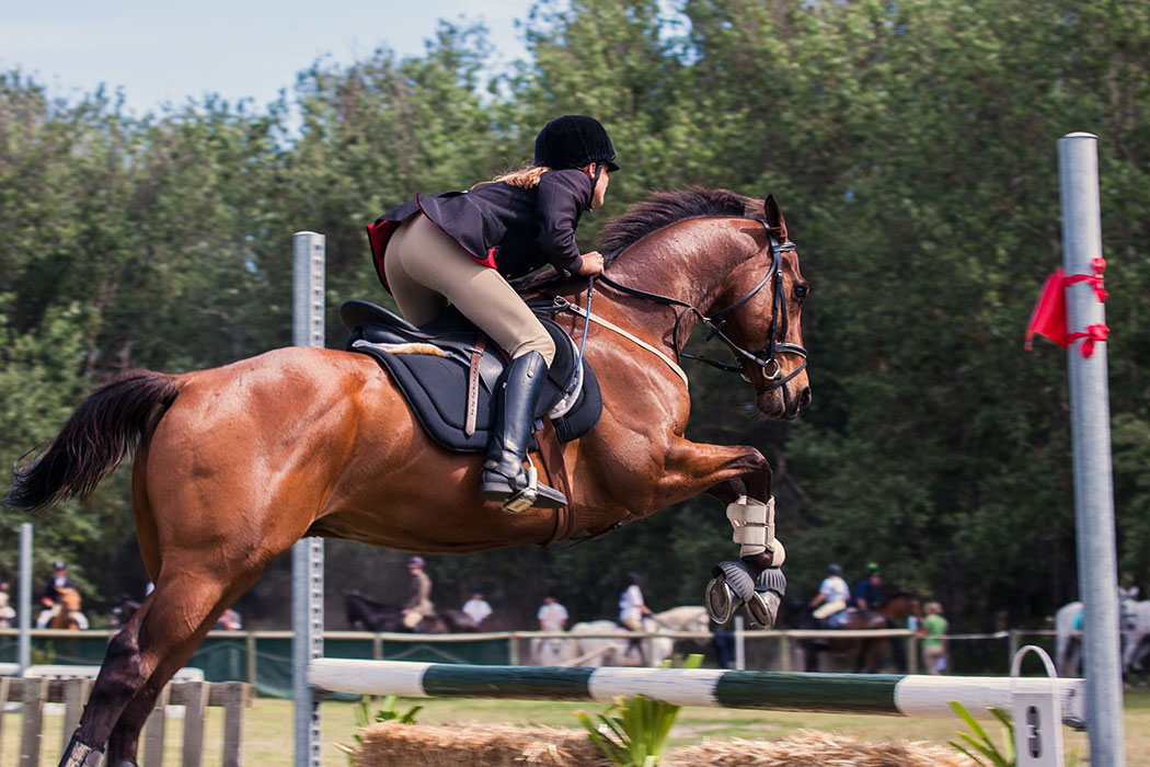 Horse and rider leaping over a hurdle in a competition