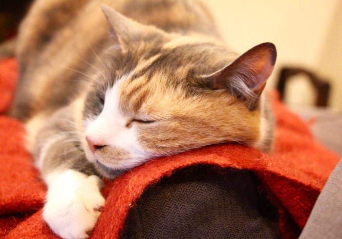 Cat-sitting in Hawthorn