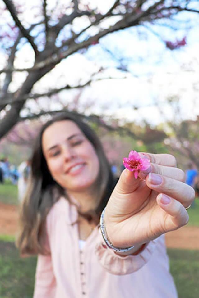 Festival das cerejeiras (sakura) em São Roque