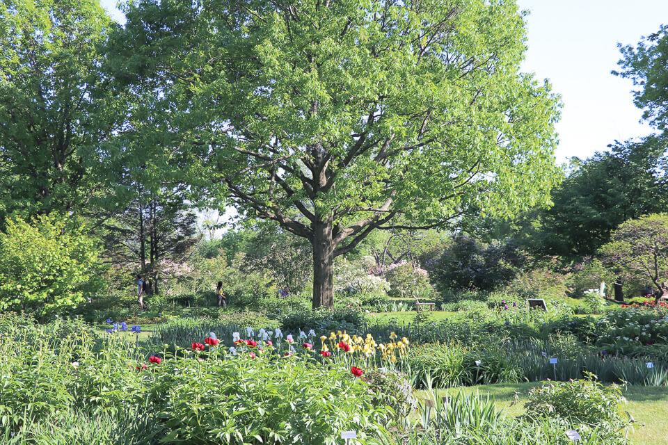 O que fazer em Montreal? Visite o Jardim Botânico, um dos mais belos jardins é o Flowery Brook and Lilacs (Riacho florido e lilás)