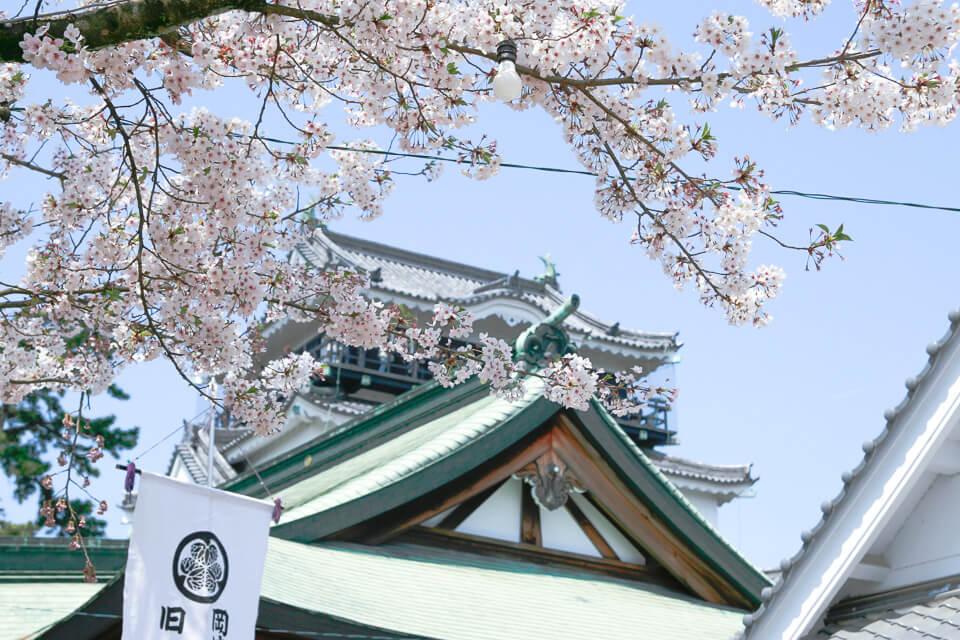 Qual melhor época para ver o sakura no japão