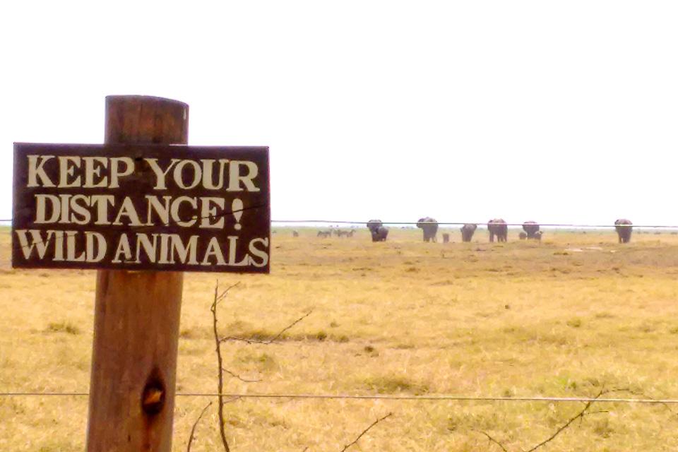 o que saber antes de embarcar para o Quênia - kenya