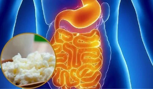 Como repovoar a flora intestinal naturalmente