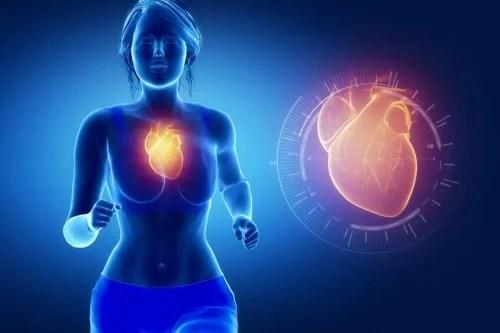 Sistema-Cardiovascular-500x333 5 benefícios do óleo de peixe para a saúde