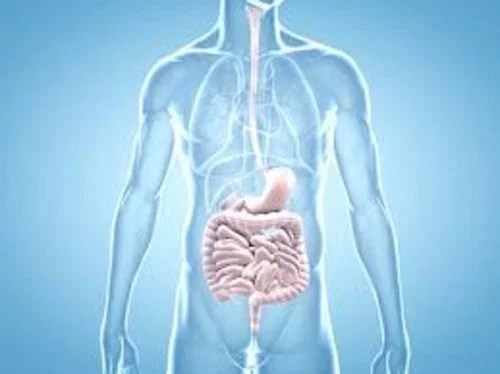 intestino-500x374 Primeiros sintomas de câncer que 90% das pessoas ignoram