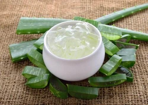 Aloe vera pode aliviar dor por queimadura