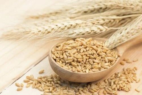 cevada-para-colesterol-500x334 Como preparar um remédio com cevada para combater o colesterol alto